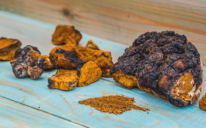 As well as providing sap for Alaska Birch Tree Syrup, Birch Trees are also host to Wild Alaska Chaga Mushrooms, valued for their tea and extract